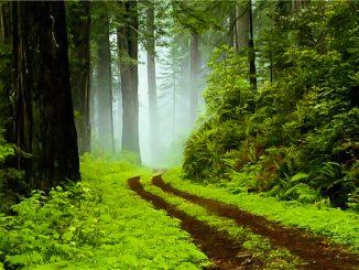 Forest Park Gisoum
