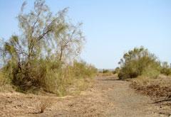 کویر مرنجاب