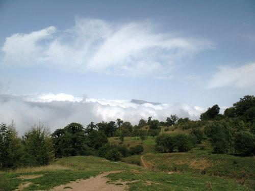 جنگل-ابر11 جنگل ابر ، بر روی ابرها قدم بزنید!