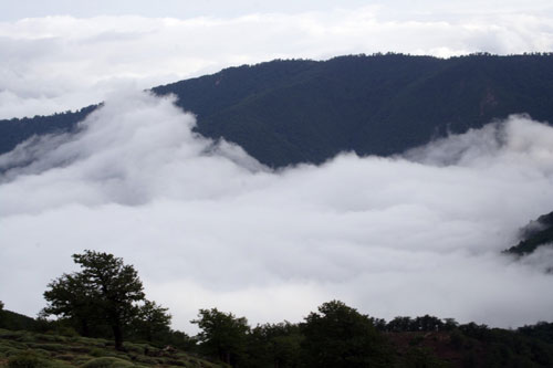 جنگل-ابر18 جنگل ابر ، بر روی ابرها قدم بزنید!