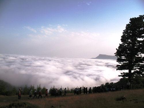 جنگل-ابر8 جنگل ابر ، بر روی ابرها قدم بزنید!