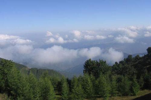 جنگل-ابر9 جنگل ابر ، بر روی ابرها قدم بزنید!