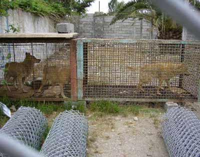 باغ وحش بابلسر