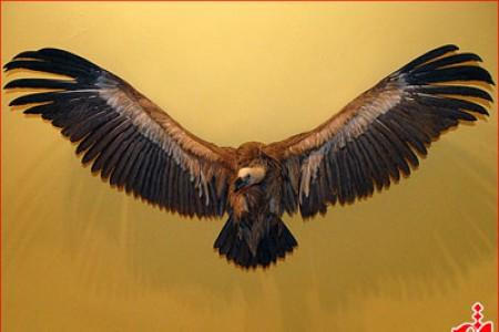 n00119115-r-s-011 موزه طبیعت و حیات وحش دار آباد