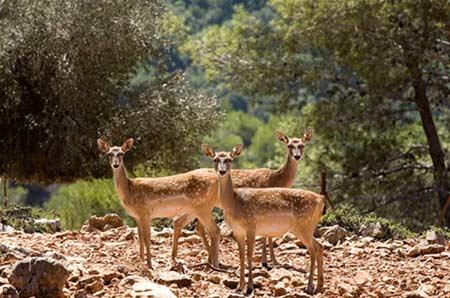 حیات-وحش-دشت-ناز منطقه حفاظت شده دشت ناز