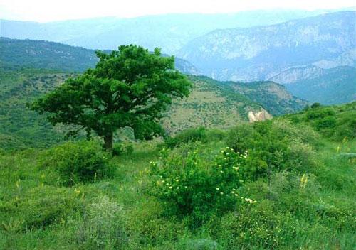 روستای-دشت2 روستای دشت جاجرم