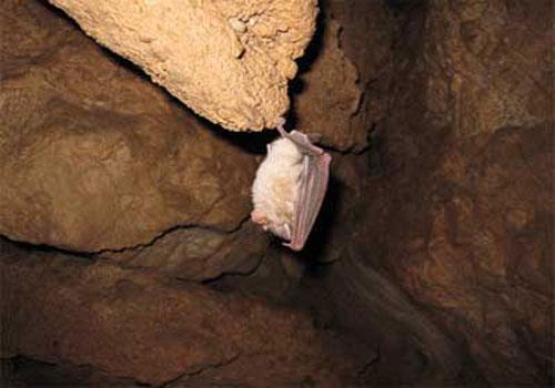 غار-گلجیک6 غار گلجیک