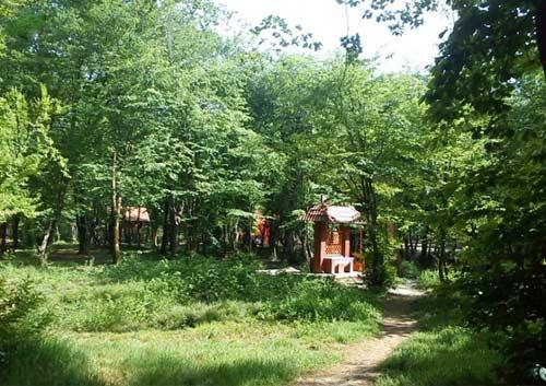 قرق3 پارک جنگلی قرق