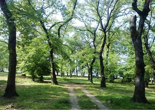 قرق4 پارک جنگلی قرق