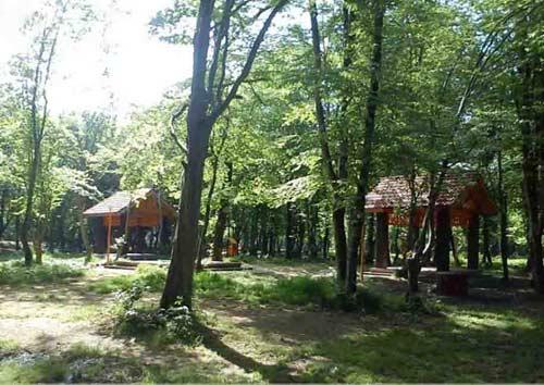 قرق7 پارک جنگلی قرق