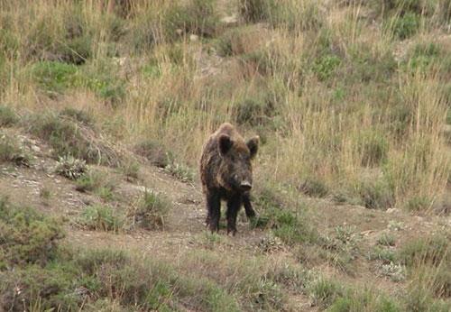 منطقه-حفاظت-شده-ساریگل10 پارک ملی ساریگل