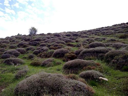 منطقه حفاظت شده سرانی شیروان خراسان شمالی
