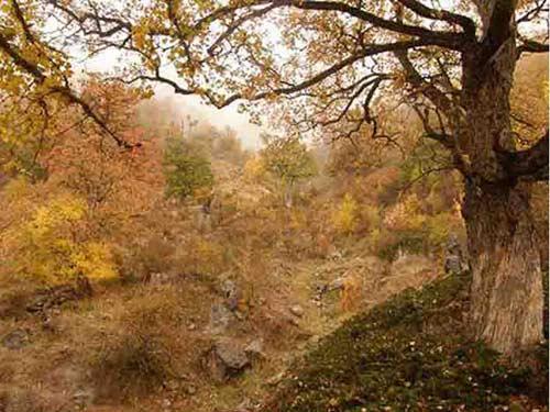 چلچلی2 منطقه شکار ممنوع چلچلی