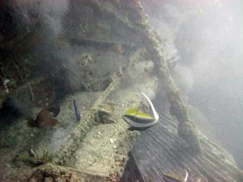 کشتی داما کیش