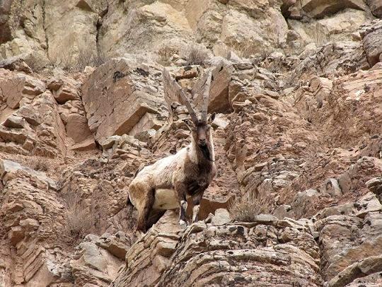 tandoreh3 پارک ملی تندوره