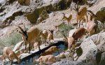 منطقه حفاظت شده اینالو