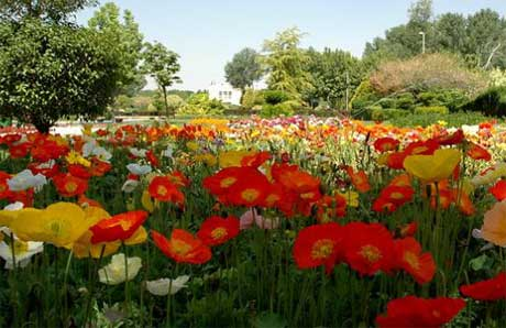 باغ رز باغ گلها