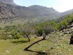 منطقه حفاظت شده کوه خامین