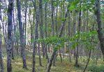 پارک جنگلی خشکهداران