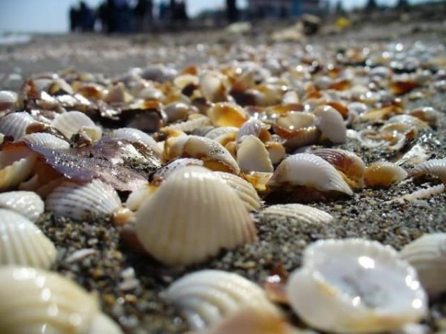 ساحل 1 ساحل فریدونکنار