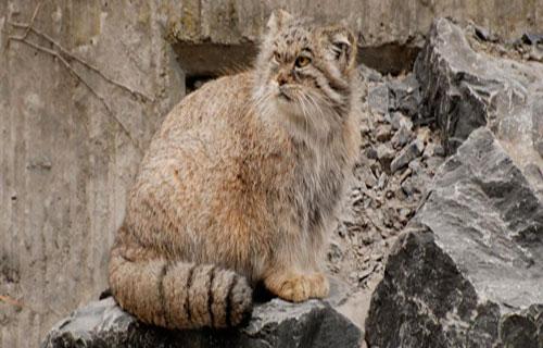 منطقه-خوش-ییلاق-گربه-پالاس منطقه حفاظت شده خوش ییلاق