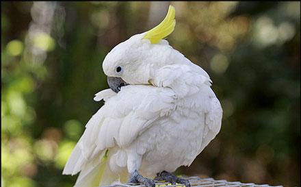 نمایشگاه 2 نمایشگاه پرندگان زینتی
