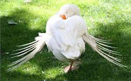 نمایشگاه 3 نمایشگاه پرندگان زینتی