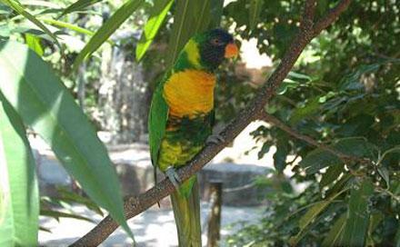 نمایشگاه 4 نمایشگاه پرندگان زینتی