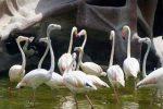 نمایشگاه پرندگان زینتی