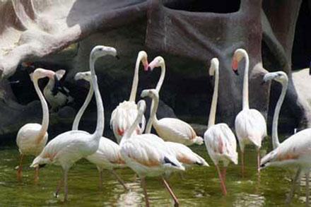 نمایشگاه 5 نمایشگاه پرندگان زینتی