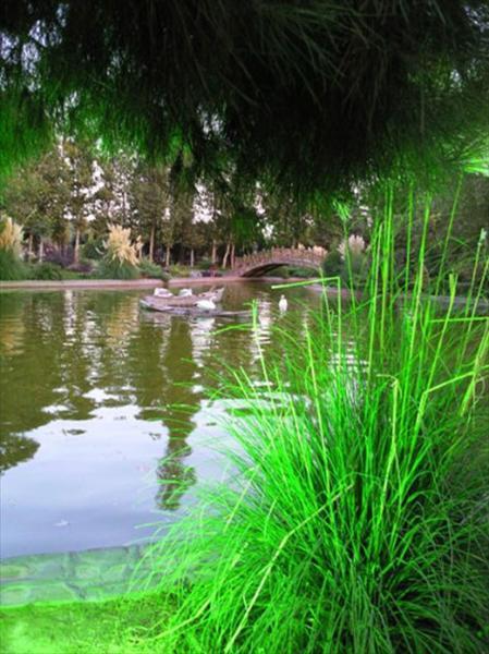 نمایشگاه نمایشگاه پرندگان زینتی