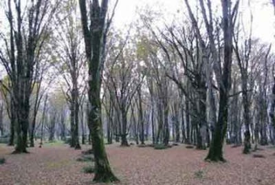 پارک جنگلی سی سنگان