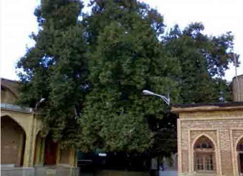 امامزاده-علی-اصغر7(1) امامزاده علی اصغر
