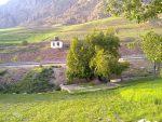 منطقه شکارممنوع چشمه ناز ونک