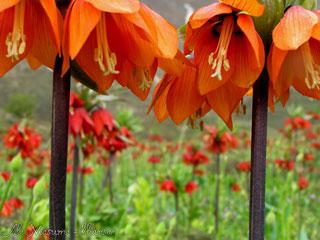 گلستان 14 گلستان کوه