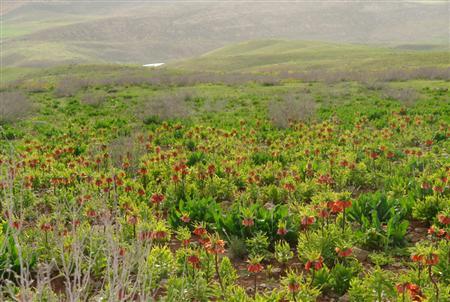 گلستان 3 گلستان کوه