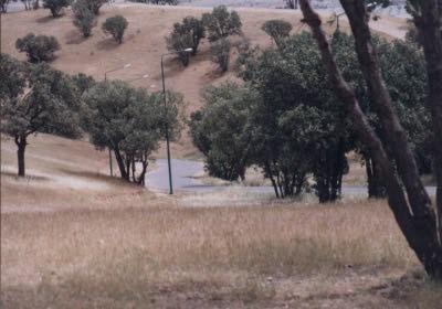 parkshorab2