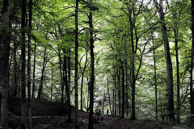 جنگل و آبگرم لاویج