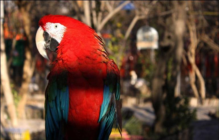 پرندگان 6
