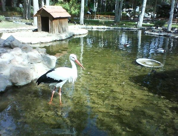 پرندگان 8