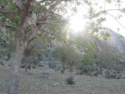 جنگل چاتیز