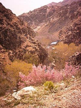 tamakoh2 مسیر کوهپیمایی درکه