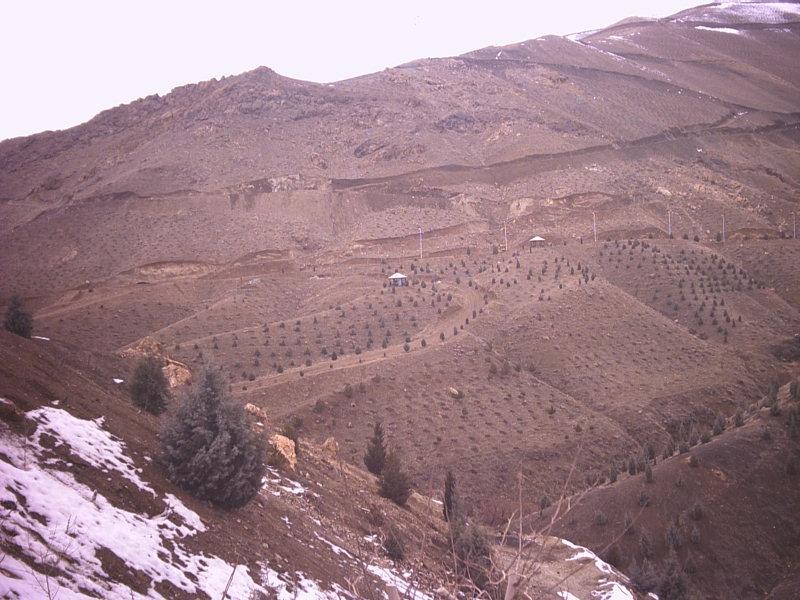 بوستان جنگلی کوهسار
