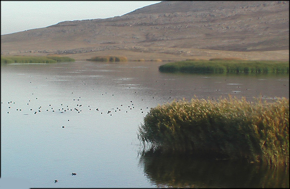 Image result for تالاب بیشه دالان بروجرد