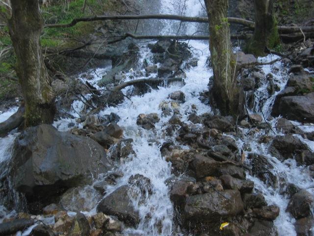 پارک جنگلی سفید آب