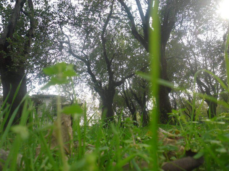 پارک 9 پارک ساحلی آستانه اشرفیه