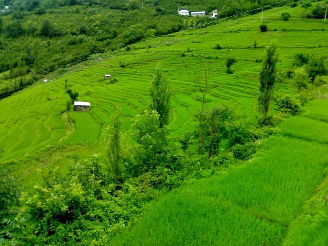 روستای پلام - فلام