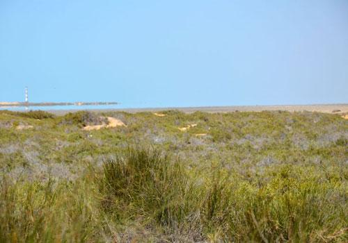 جزیره جبرین5 جزیره جبرین