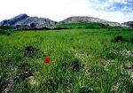 شکارگاه کوه سیاه