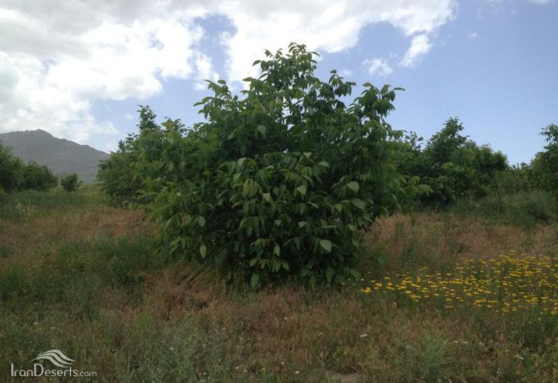 هوراند 8 منطقه حفاظت شده هوراند